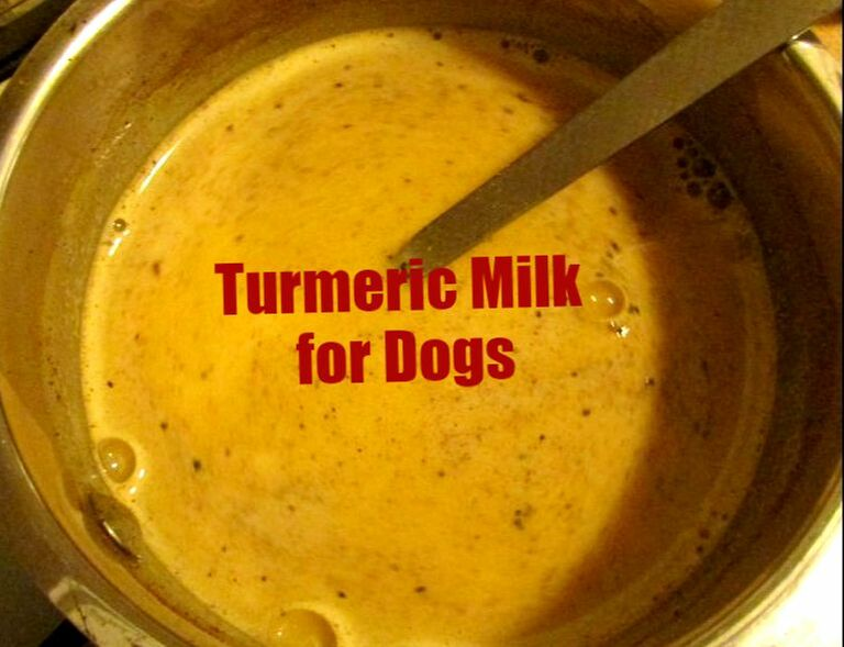 Turmeric for Dogs - THE GARDEN RECIPE