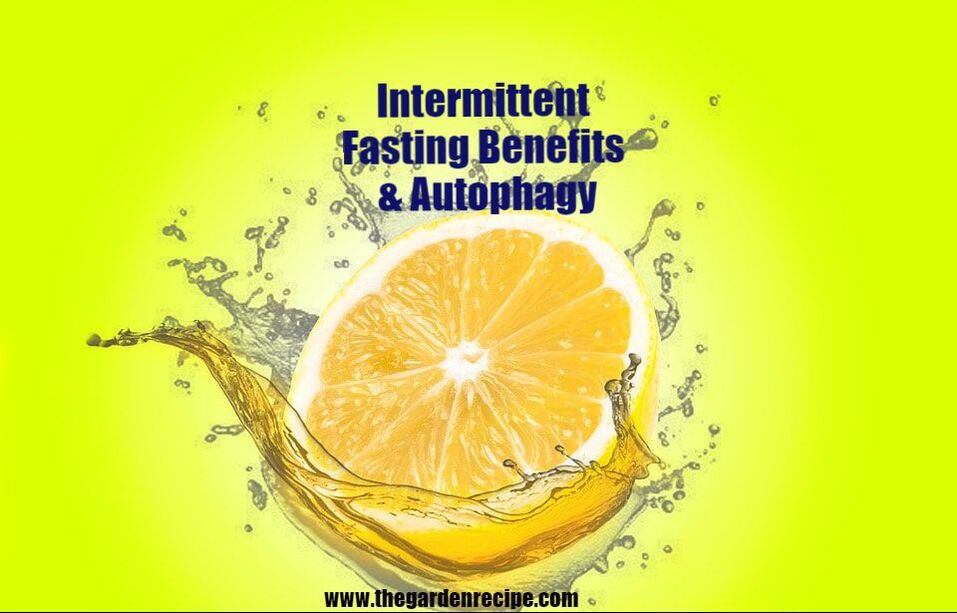 Intermittent Fasting Benefits & Autophagy I The Garden